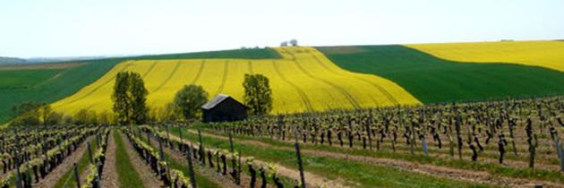 domaine-de-reuilly-reuilly-denis-jamain-cuvee-les-pierres-plates-2010