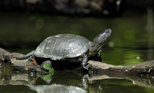 tortues-uby