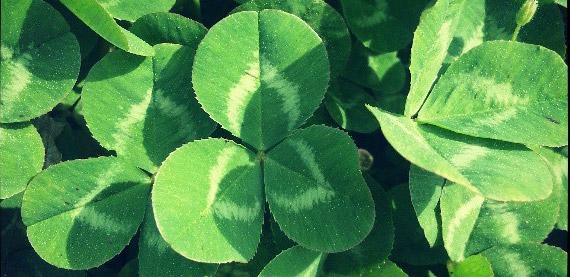 trefles-irlande-degustation-limoges