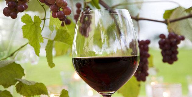 vin-primeur-limoges-vinoble