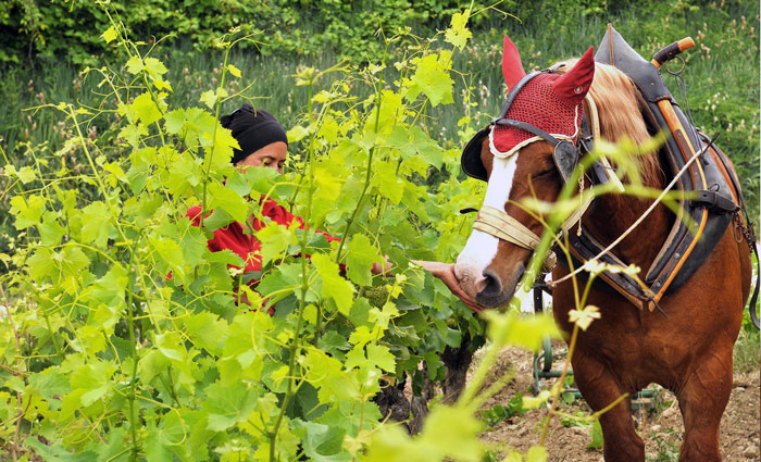 Helene-Catherine-Thibon-vin-cheval
