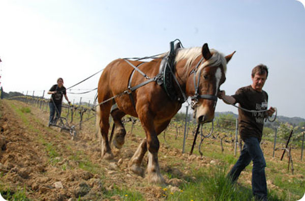 bio-biodynamie-vigne-cheval-trait