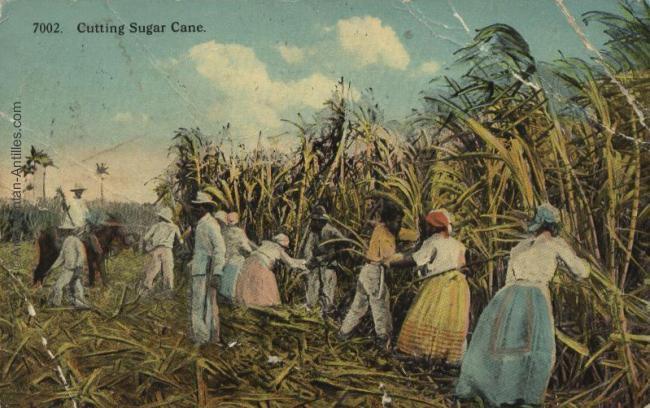plantation-canne-sucre-histoire