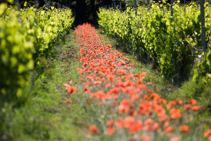 vigne-bio-bon
