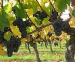 domaine - Lorieux - frères - vignerons