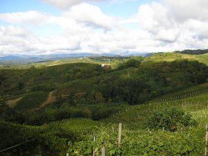 ilchiosso-vigne